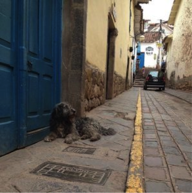 Stray Dogs of Cusco